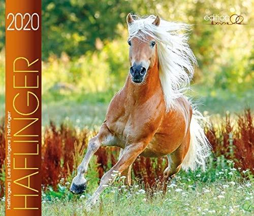 Haflinger 2020